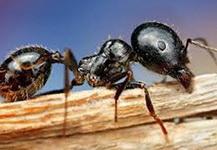 Чувствуют ли муравьи смерть
